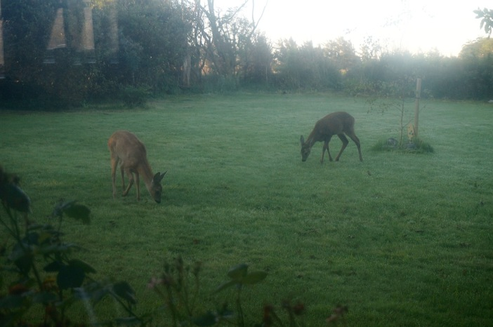 Van achter driedubbel glas gefotografeerd: vroeg bezoek in de tuin...