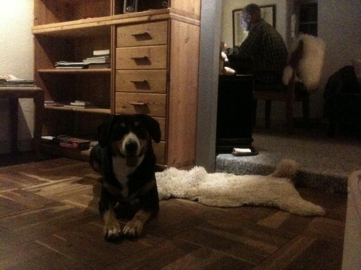 Entlebucher Sennenhond met schapenvacht bij een boekenkast