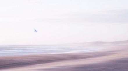 ICM foto van een meeuw boven de kust, strand, duinen, zee