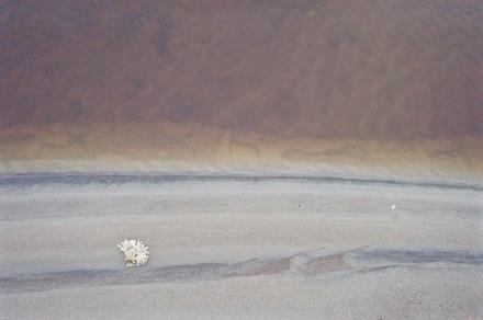 Mooi wit wiertje op een roestbruin en grijs strand
