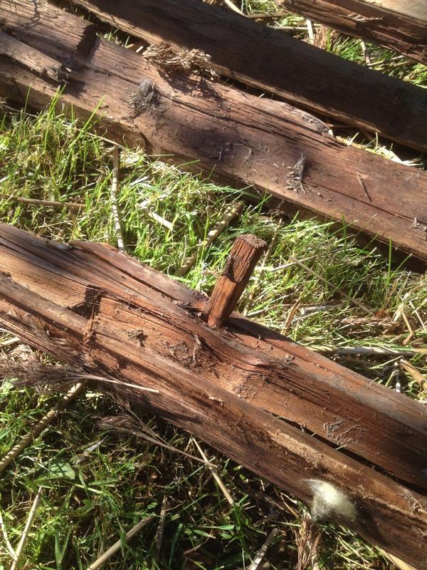 2018-06-06 10.20.21 Zo oud is een deel van de kap, met houten pennen ipv spijkers