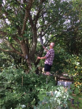 Jacob 'vangt' de kersen hoog uit de boom met een stuk pvc-pijp