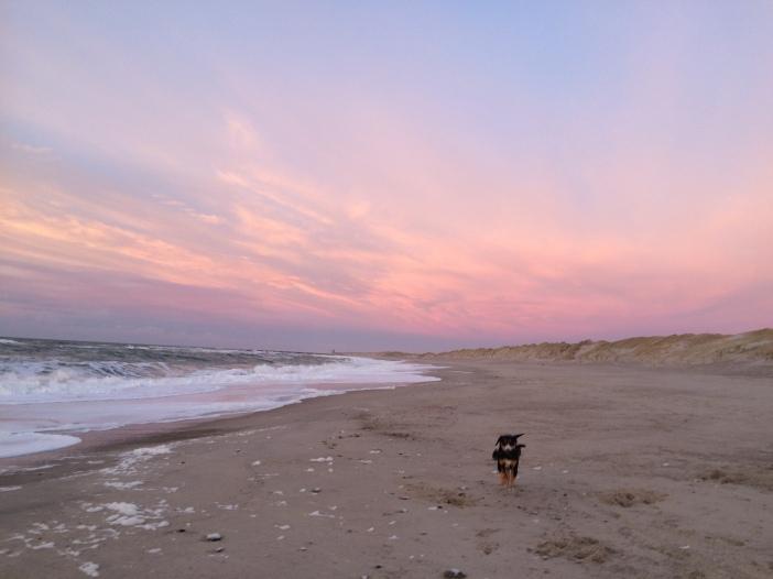 zonsondergang, Thy, strand, hond, jutten