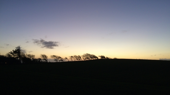 Avondlucht bomen Kobberø