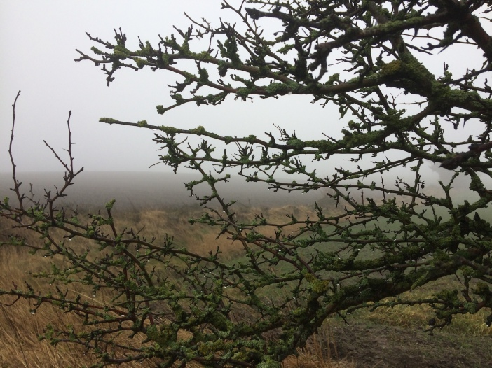 Mist en meidoorn