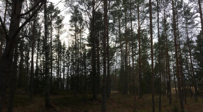 bomen, bos, Lövö