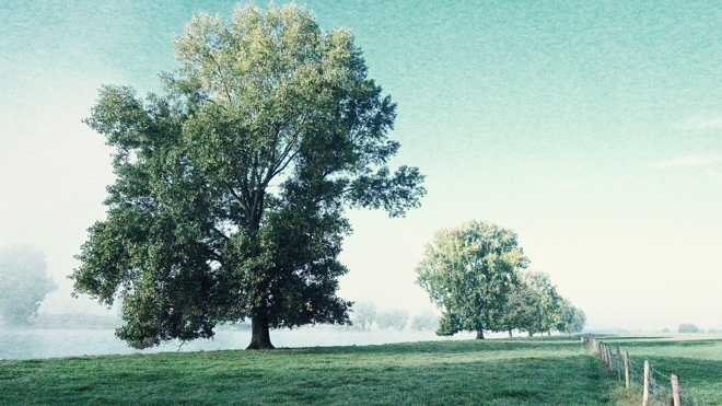 shivering-trees-in-morning-haze