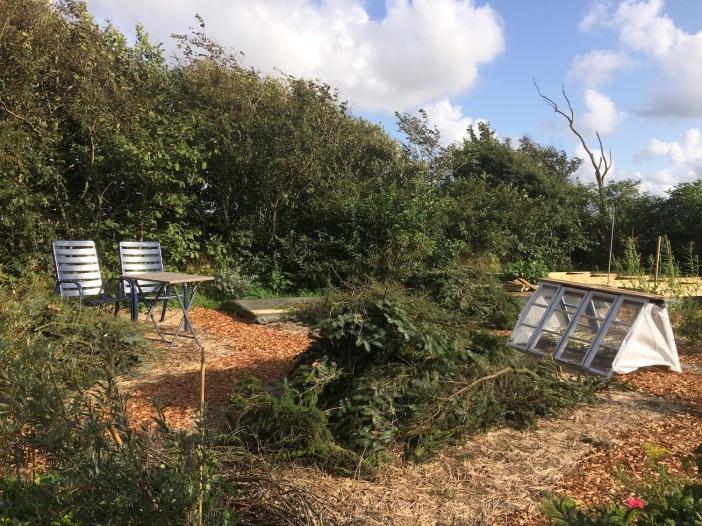 sitkatakken in de tuin