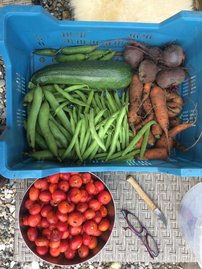 moestuin, bietjes, courgette, wortels, sperzieboontjes, tuinbonen