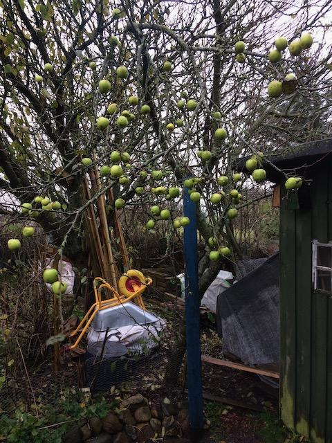 Appelboom met kruiwagen